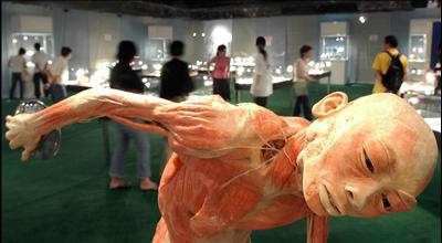 people's daily online -- wonders of human body exhibition, Muscles