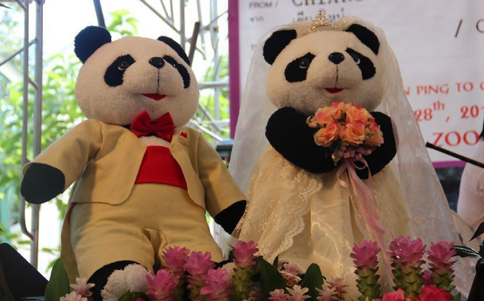 "Thai-born panda ""Lin Bing"" to come back to China"