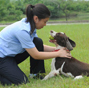 80 security dogs assembled in Nanjing police dog training base