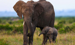 Bring world together to help elephant