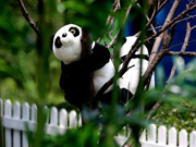 300 'Pandas' shown in Beijing