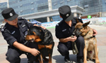 More police dogs join anti-terror campaign in Inner Mongolia
