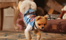 Gallery: Tiny Pomeranian sprints into Guinness Book of World Records