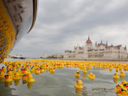 Yellow rubber duck Danube in Budapest