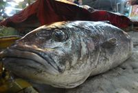 Unknown 'monster' fish caught in Shandong