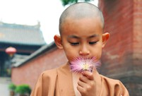 4-year-old cute 'monk' spends summer holiday in temple