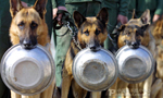 Dogs in uniform: China's combat canines