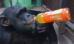 China's zoo animals keeping cool in summer heat