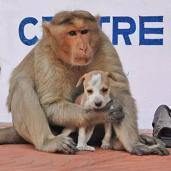 Monkey who adopts a puppy touches the world
