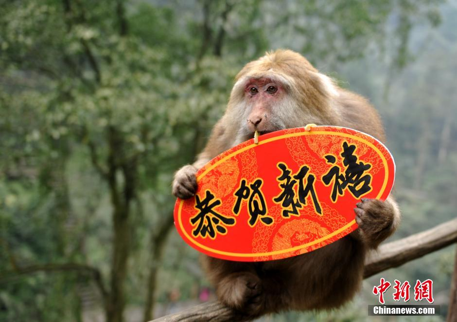 Cute monkeys send New Year wishes to tourists in Mount Emei