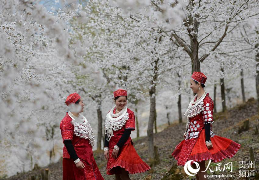 Cherry blossom in Huangping, SW China