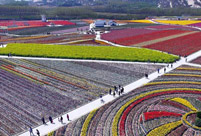 Breathtaking aerial photos of tulip blossoms in C China