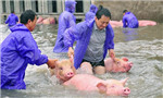 Animals rescued from S.China floods