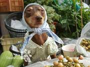 Cute Dog At Fruit Stand Becomes Latest Internet Sensation