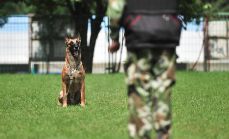 Rescue dogs undertake annual training