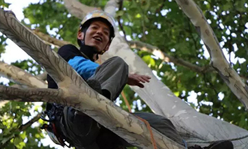 University organizes tree-climbing course in Shaanxi