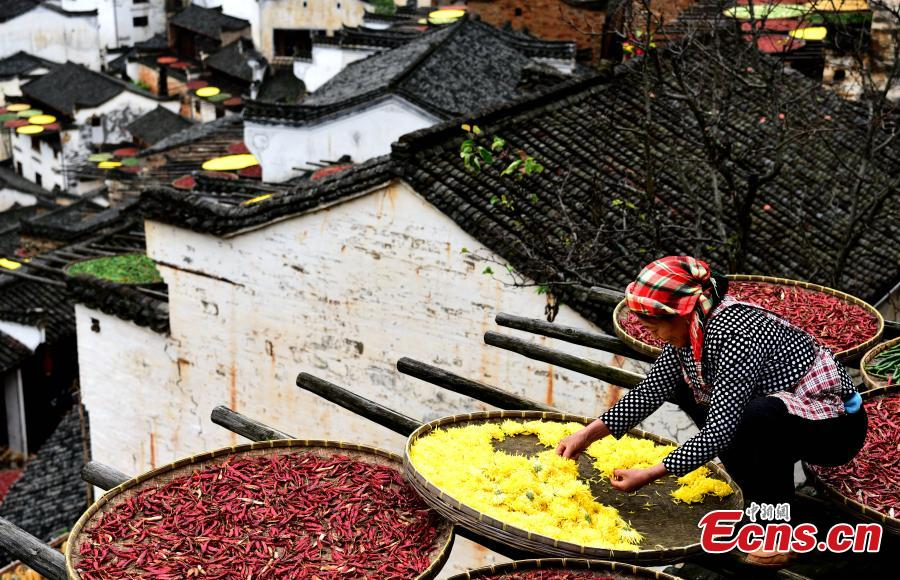 'Shaiqiu' tradition, a beautiful token of Chinese agrarian culture