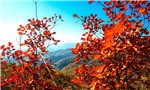 Hills on fire: Autumn scenes from China's Daimei Mountain