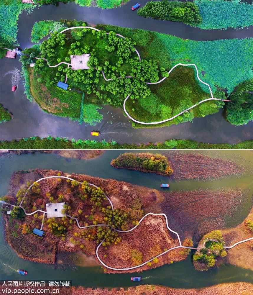 Aerial view of Shandong wetland park