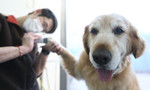 Fur babies in China are living luxurious lifestyles, which include specialty treats, personal wardrobes and their own rooms