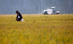 China to increase high-quality agricultural output