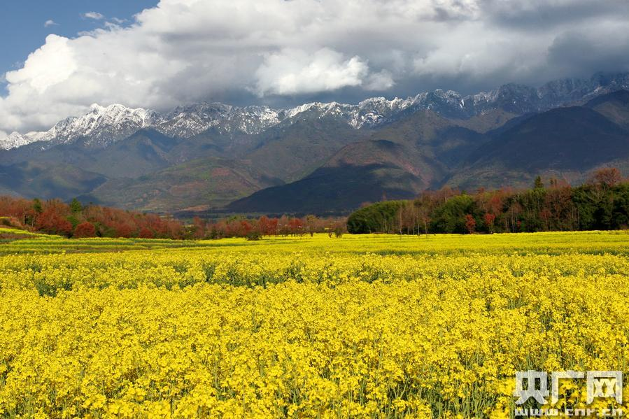 Sea of flowers beneath Gaoligong Mountains