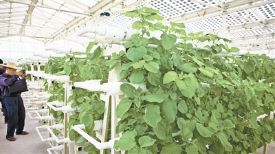 South China Sea island begins to supply fresh vegetables