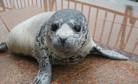 Newborn seal cubs meet with public in Shandong