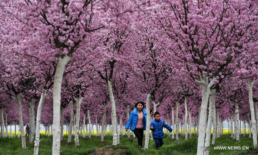 Spring scenery in Tiandang Mountain, NW China