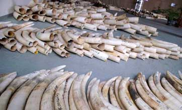 Fate of existing ivory products in question after ivory trade ban