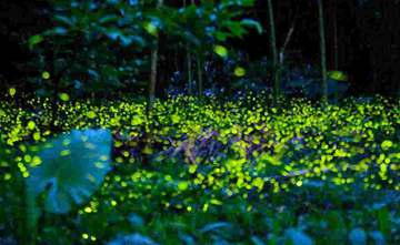 Firefly exhibition blasted for animal abuse, environmental damage