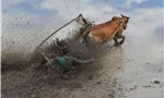 Holy cow! Competitors take part in Indonesia's mud cow race