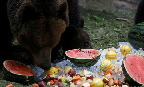 Animals cool off from summer heat in South Korean zoo