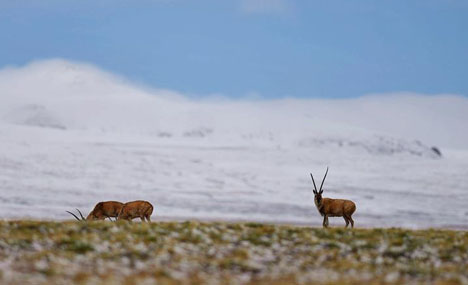 Scientists conduct scientific expedition on Qinghai-Tibet Plateau