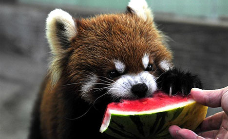 Shanghai Zoo takes varied measures to keep animals cool