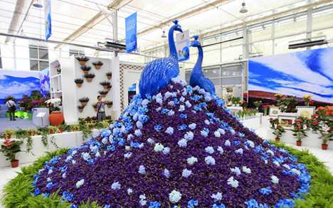 9th China Flower Expo kicks off in Yinchuan