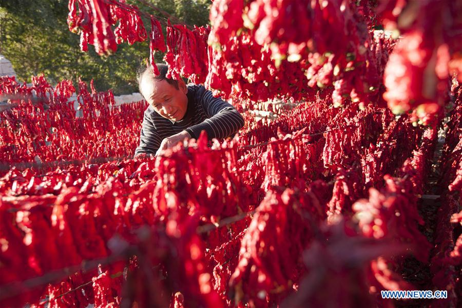 Farmer dries peppers in NW China's Xinjiang