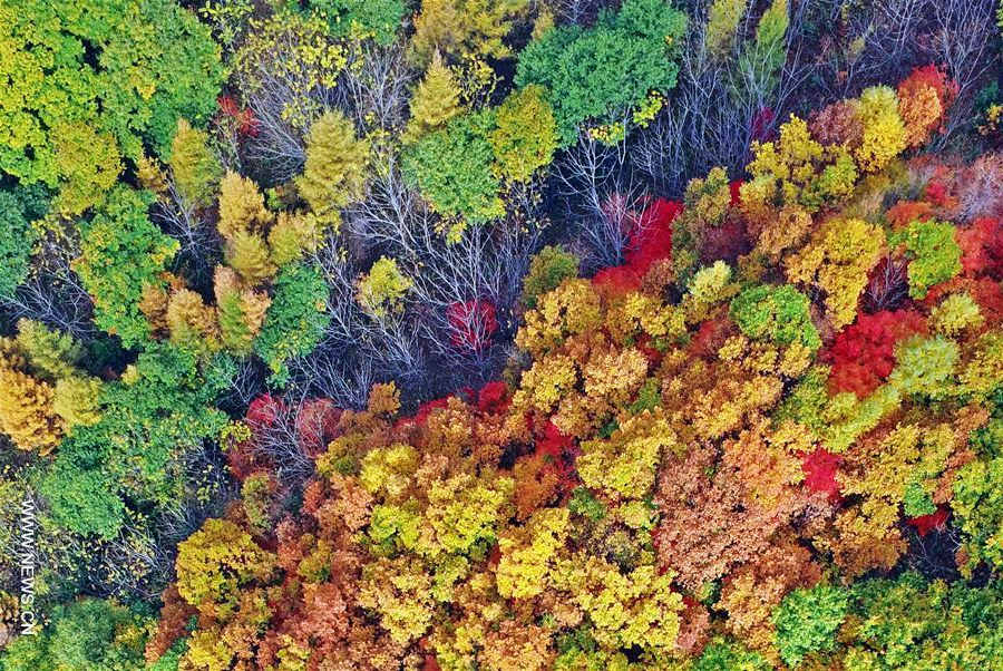 Autumn scenery in NE China's Liaoning