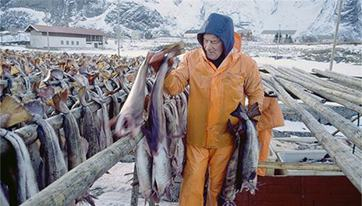 Norway to expand seafood exports to China after normalization of bilateral ties