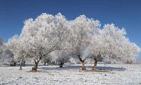 Rime scenery in Altay, NW China's Xinjiang