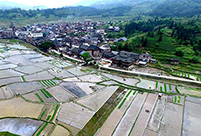 Spring scenery of paddy field in central, south China