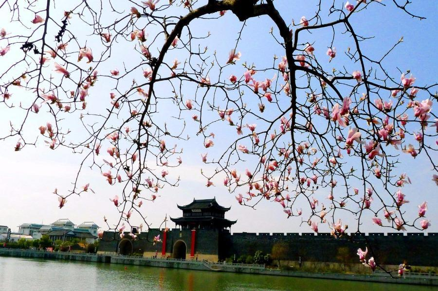 Top 10 easiest chinese cities to do business 10 peoples daily plum trees and magnolia flowers are blossoming after the rain in suzhou east chinas jiangsu province march 6 2018 as spring comes and weather gets publicscrutiny
