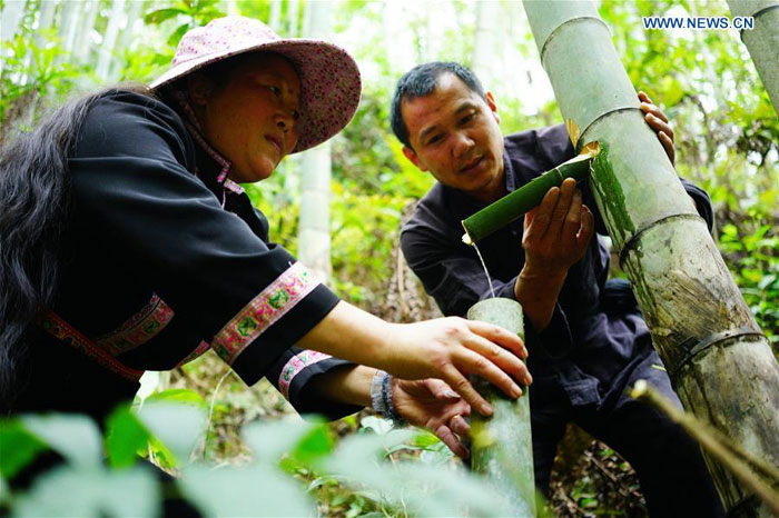 In pics: bamboo wine industry in Longji Town, south China's Guangxi