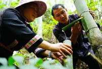Bamboo wine industry in Longji Town, south China's Guangxi