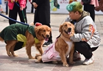 Online calls to poison unleashed canines grow louder in China amid rabies fear