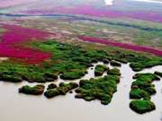 Aerial view of Hongze Lake in east China's Jiangsu