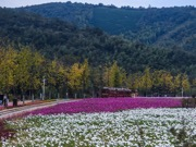 Beautiful scenery of flower-decorated Xiaopu Township in east China