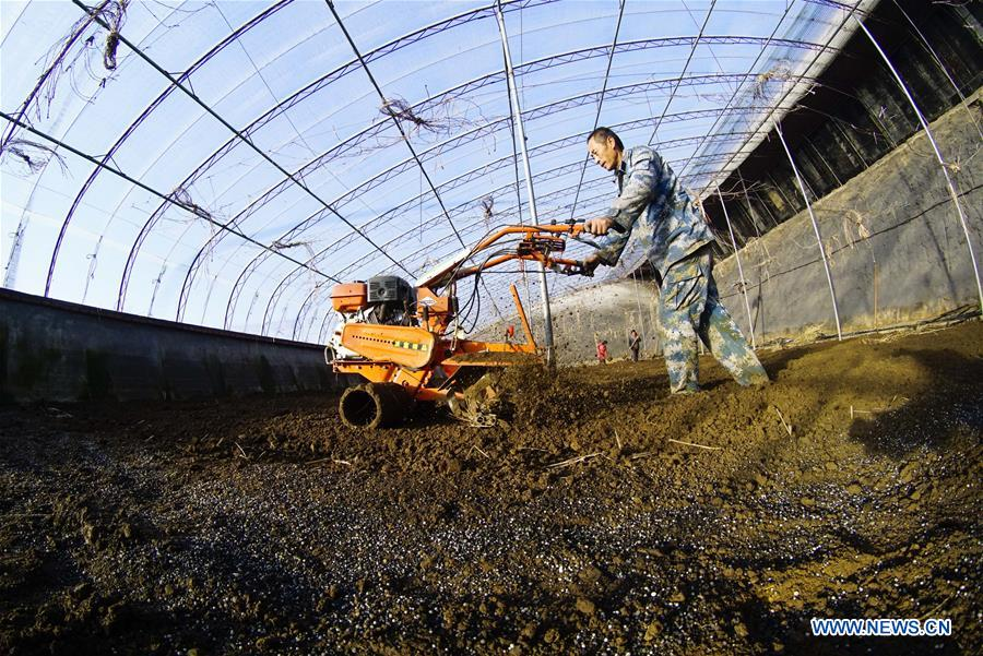 Farmers busy with farm work in greenhouse across China