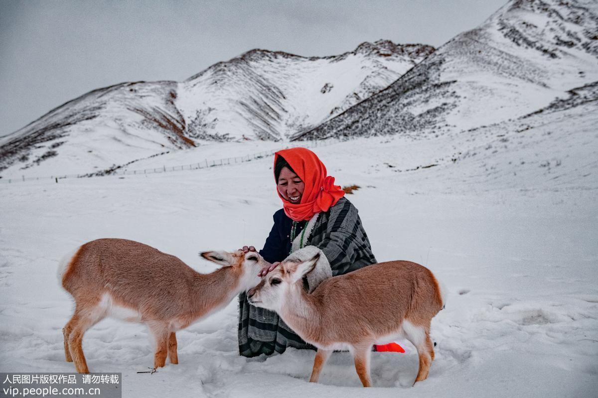 Tibetan family saves wild animals on 4,000-meter-high ...