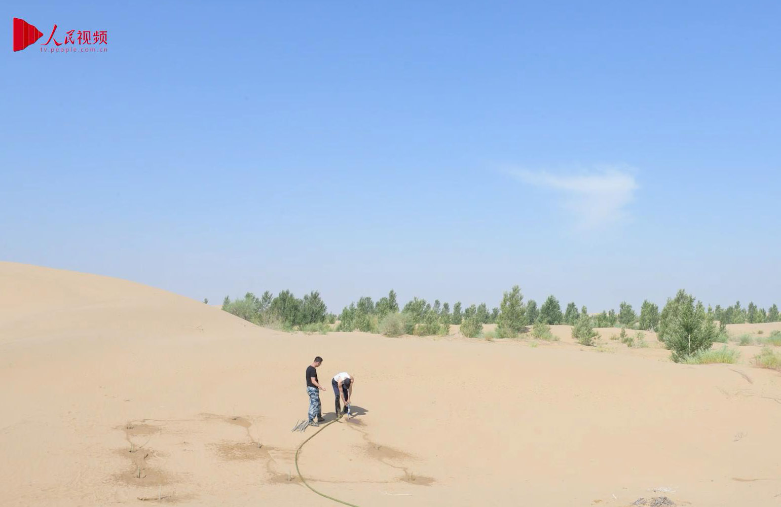 Guardians of China's desert can plant trees in just 10
